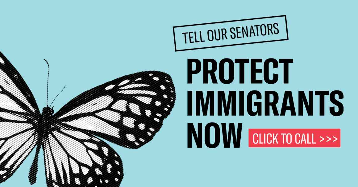 """A monarch butterfly with the words """"Tell Our Senators: Protect Immigrants Now. Click to Call"""""""